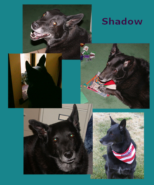 Memorial page for Shadow