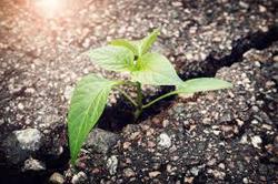 resilient plant