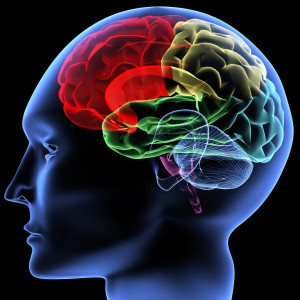 Brain and learning, impact of stress and fear